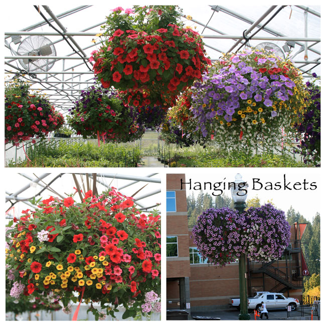 slideshow-hanging-baskets